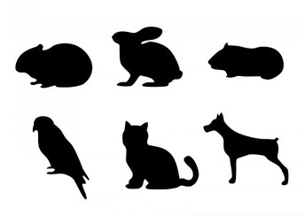 Student Survey Question:  What pets do you have?