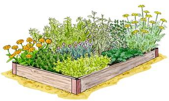 Summer Garden Help!