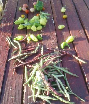 Peppers & Peas
