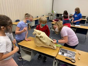 Discovering Animal Characteristics