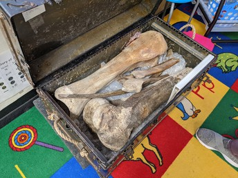 treasure chest with authentic woolly mammoth bones discovered by the Whiting family on their farm in Chesterland in 1942