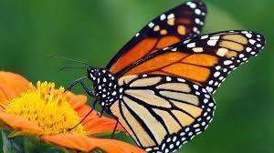 Butterfly Bazaar & Parade