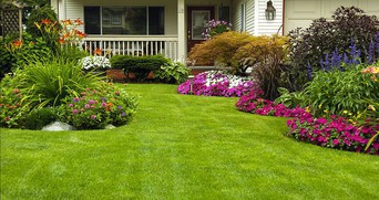 Healthy Lawns: Registration Deadline 7/18/20