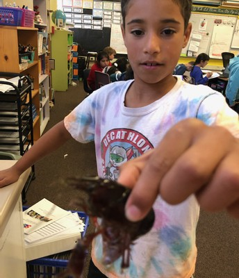 Zain and the class crayfish
