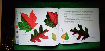 """""""Why Do Leaves Change Colors?"""""""