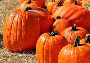 Halloween Guidelines