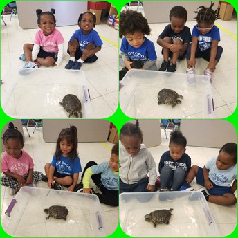 Pet Day in PK 2