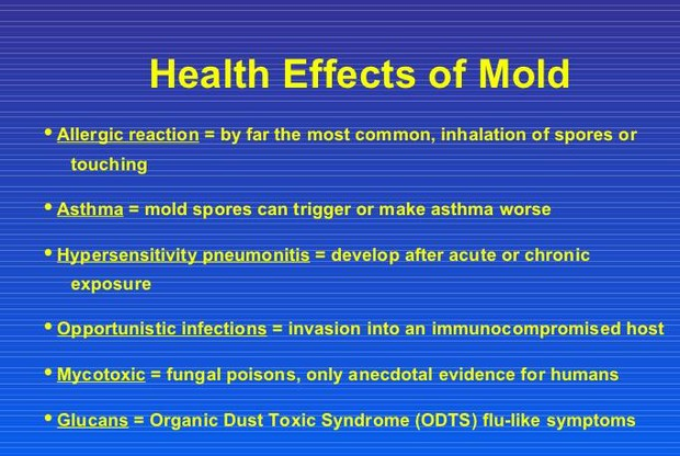 Health Risks Of Mold