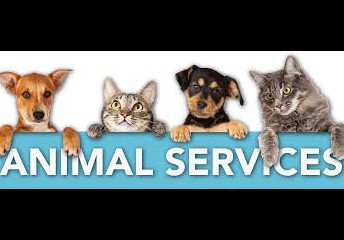 Keokuk Animal Shelter - May 3