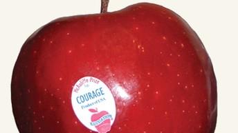 Do you know a courageous teacher?