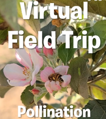 Part 2: How flower parts help with pollination