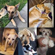 Donate Supplies to 4 Dogs Farm Rescue in Mexico!