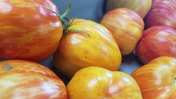 Get Stuffed Tomato