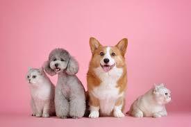 Pet Photos