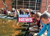 We have tadpoles!