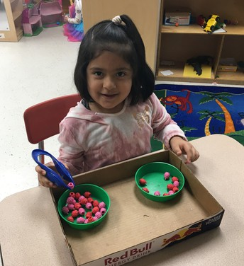 K4 is learning fine motor skills using tongs and pom-poms.