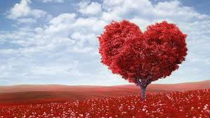 Valentine's Day Come True