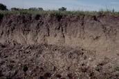 Soil Qualities