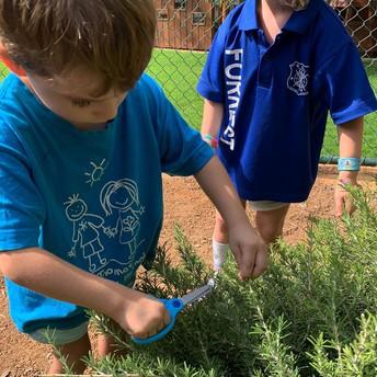 Kindy Herb Garden