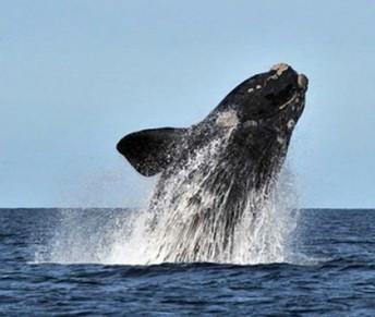 San Diego Whale Watching Trip