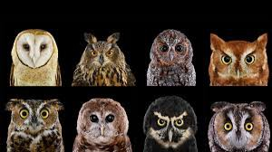 All About Owls in the Boreal Forest Grade 3 & 4's
