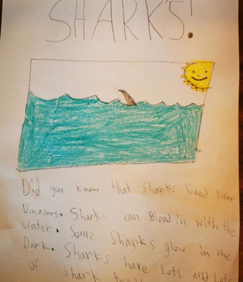 Elijah did some research on sharks