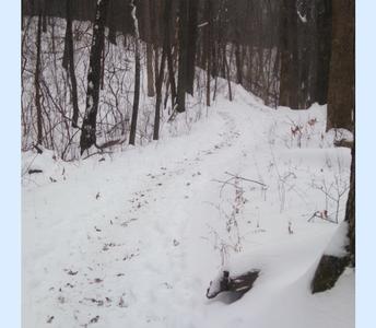 Winter Wonder Walk
