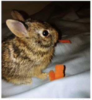 A very happy and well cared for rabbit – 2 weeks later