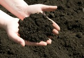Ready-to-use Potting Soil