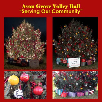 Vote for the Avon Grove Area Girls Volleyball Tree