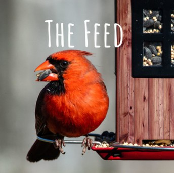 The Feed is a new GHS podcast.