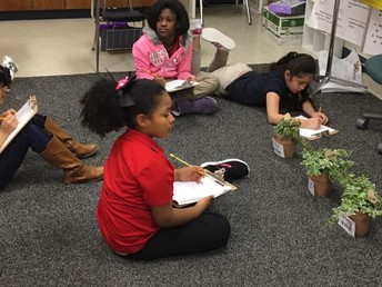 Plant observations