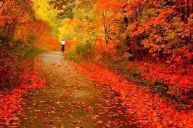 Be a Leaf Peeper