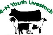 Youth Livestock Projects and the VFD Regulation