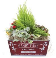 Holiday Indoor Tropical Planter