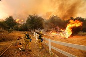 Fire fighters struggle to put out a forest fire