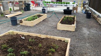 New Raised Beds With Fall Crops