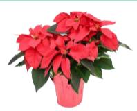 Annual Poinsettia Sale Volunteers Needed