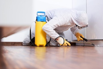 Pest Control Services Offered By Leading Specialists Can Eradicate Pests Quickly and Effectively!