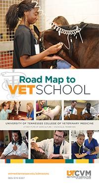 UT's Veterinary Summer Experience Program