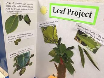 1-3 Botany