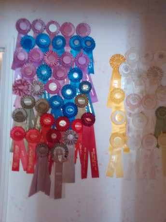 ANSWER: This is on a wall in Virginia Rhan Halloway's home.  These are her juried ART AWARDS!