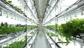 Further Advice On Necessary Criteria Of Hydroponic Systems For Sale