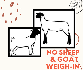 NO Sheep & Goat Weigh-In