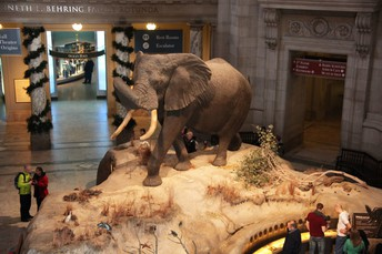 Virtual Tour: The Smithsonian National Museum of Natural History