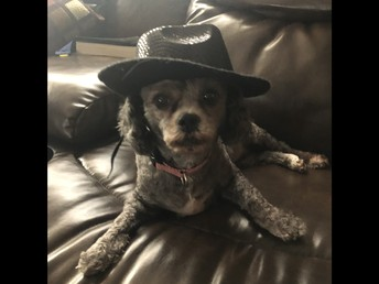 Pepper wore her hat too!