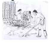 Preparing the land