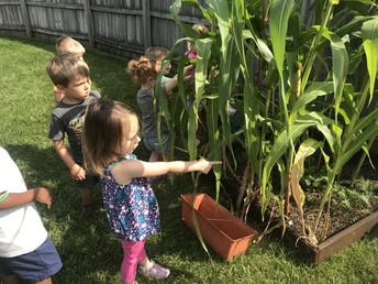 Look at our corn!