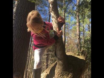 Preschoolers Trip to the Woods