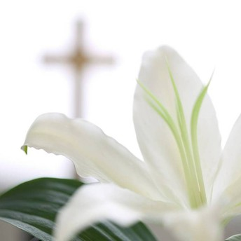Easter Lily Sign-Up